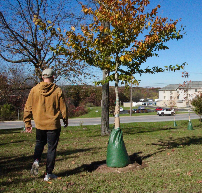 Senior Grady Zagorac walks past the newly planted trees near Kunk's Drive last week.