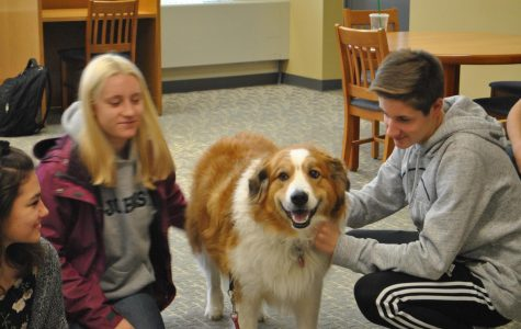 Dogs soothe midterm stress